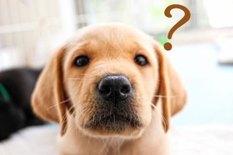かわいい子犬 はてな?